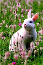 White bunny in the flowers