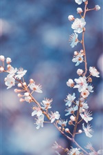 Preview iPhone wallpaper White cherry flowers bloom, twigs, blurry background