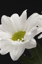 iPhone壁紙のプレビュー 白い花、黒い背景