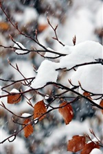 Preview iPhone wallpaper White snow, twigs, yellow leaves, snowy, winter