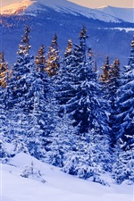 Winter, snow, forest, mountains