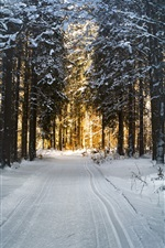 Preview iPhone wallpaper Winter, snow, trees, forest, sunlight