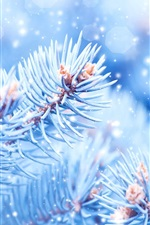 Preview iPhone wallpaper Winter, spruce twigs, snow