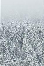 Preview iPhone wallpaper Winter, trees, spruce forest, snow