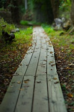 Wooden path, leaves, blurry