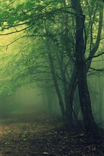 Preview iPhone wallpaper Woods, trees, mist, morning