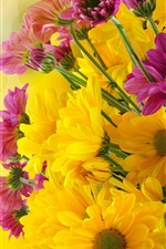 Preview iPhone wallpaper Yellow and purple chrysanthemum flowers