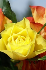 Preview iPhone wallpaper Yellow and red roses