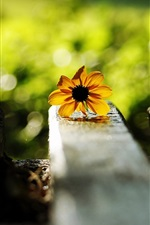 Preview iPhone wallpaper Yellow flower, bench, green background