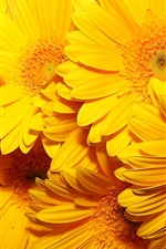 Preview iPhone wallpaper Yellow flowers macro photography, beautiful