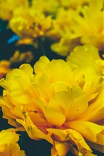 Preview iPhone wallpaper Yellow flowers, petals
