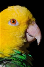 Preview iPhone wallpaper Yellow head parrot close-up
