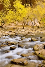 Preview iPhone wallpaper Zion National Park, creek, stones, trees, autumn, USA