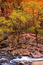 Preview iPhone wallpaper Zion National Park, stream, stones, trees, USA