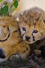 Preview iPhone wallpaper Africa, Kenya, big cat, cheetah, cub
