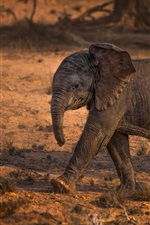 Preview iPhone wallpaper African, elephant baby