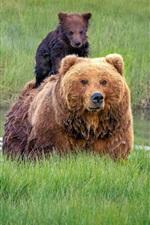 Preview iPhone wallpaper Alaska, bears, family, wet, cubs, grass