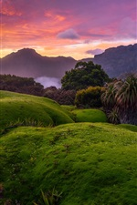 Australia, Tasmania, bushes, green grass, red sky, clouds, sunset