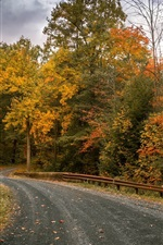 Autumn, forest, trees, road, clouds