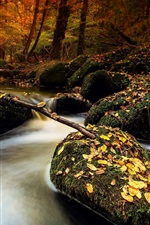 Preview iPhone wallpaper Autumn, stones, moss, stream, leaves, forest