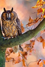 Preview iPhone wallpaper Autumn, tree, red leaves, owl