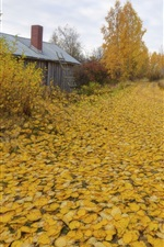 Preview iPhone wallpaper Autumn, yellow leaves, trees, road, house