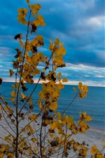 Preview iPhone wallpaper Beach, sea, tree, yellow leaves, clouds, sunset