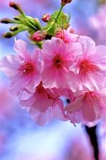 Preview iPhone wallpaper Beautiful pink sakura, flowers bloom, spring