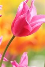Preview iPhone wallpaper Beautiful pink tulips, petals, buds