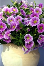 Preview iPhone wallpaper Beautiful purple petunias flowers, vase