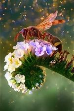 미리보기 iPhone 배경 화면 꿀벌과 꽃, 아름다운 그림