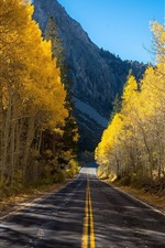 Preview iPhone wallpaper Birch trees, road, mountain, autumn