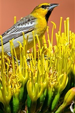 Preview iPhone wallpaper Bird standing in flower