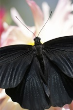 Preview iPhone wallpaper Black butterfly, wings