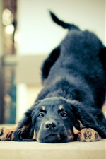 Preview iPhone wallpaper Black dog playful
