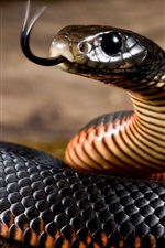 Preview iPhone wallpaper Black snake, viper