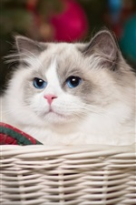 Preview iPhone wallpaper Blue eyes cat, basket