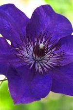 iPhone壁紙のプレビュー 青紫クレマチス花マクロ写真