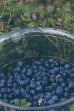 Preview iPhone wallpaper Blueberry, glass bowl, plants