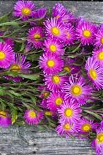 Bouquet flowers, pink aster, wood board