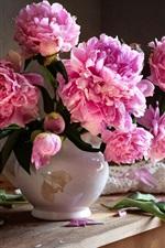 Bouquet, peônias rosa, gotas de água
