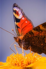 Preview iPhone wallpaper Butterfly close-up, yellow flower