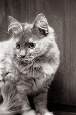 Preview iPhone wallpaper Cat look back, black and white picture