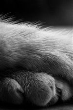 Preview iPhone wallpaper Cat paws, black and white picture