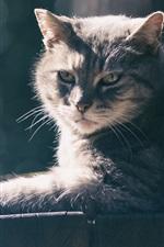 iPhone fondos de pantalla Resto del gato, tablero de madera, sol
