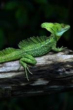 Preview iPhone wallpaper Chameleon, lizard, reptile