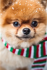 Preview iPhone wallpaper Cute dog front view, face, scarf, snow
