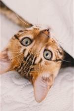 Olhar gatinho bonito, pano