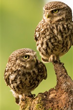 Cute two owls, stump, green background