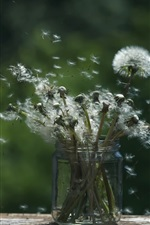 Preview iPhone wallpaper Dandelions flying, bottle